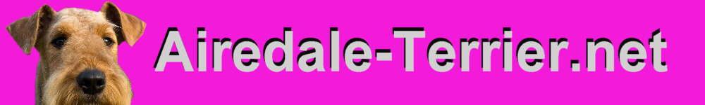 Airedale Terrier Hunde Informationen Rassebeschreibung Aussehen Charakter